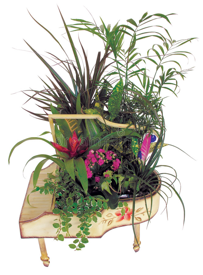 Download Beautiful Plants Arrangement Stock Image - Image: 6904817