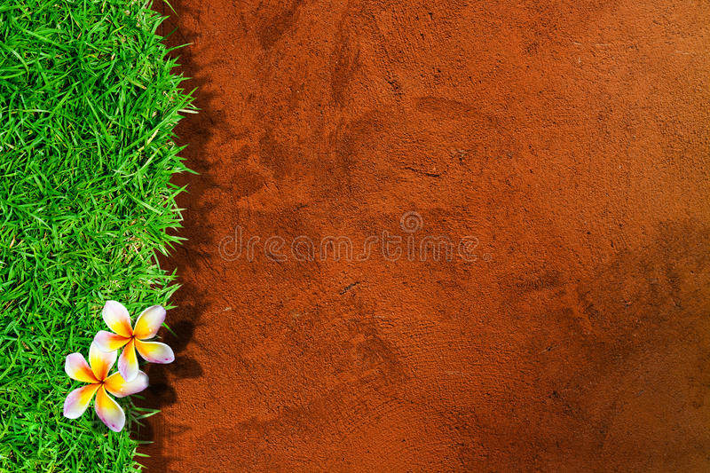 Download Beautiful Plumeria Isolated Stock Images - Image: 26627754