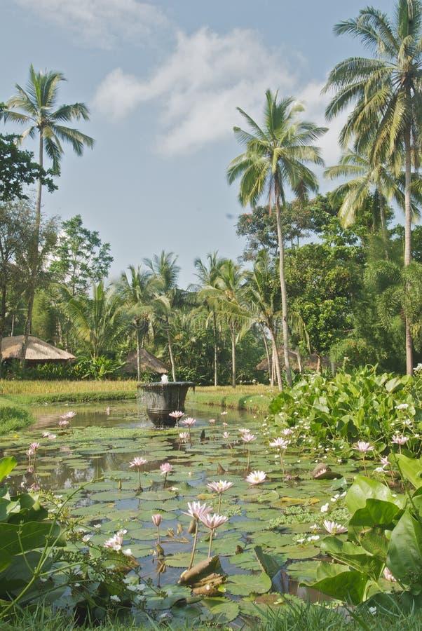 Beautiful pond. stock photos