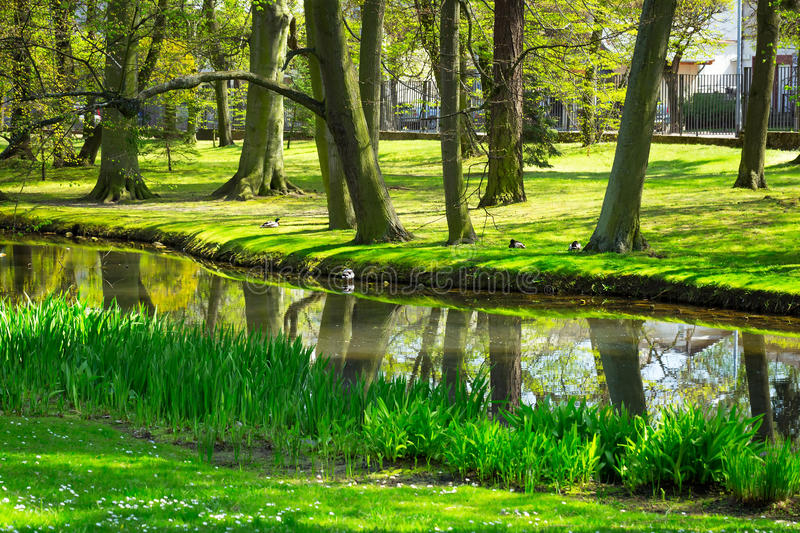 Beautiful Pond In The Park Stock Photo