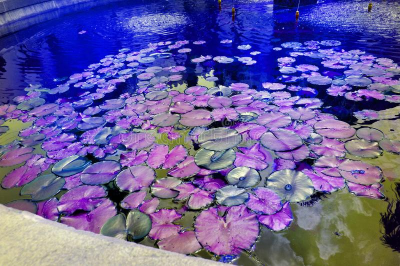 Beautiful pond with water Lily plant, lilac and purple tinted background with neon glow effect, fantasy, fabulous, copy space royalty free stock photos
