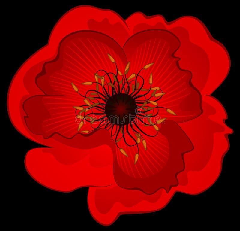 Beautiful poppy stock illustration