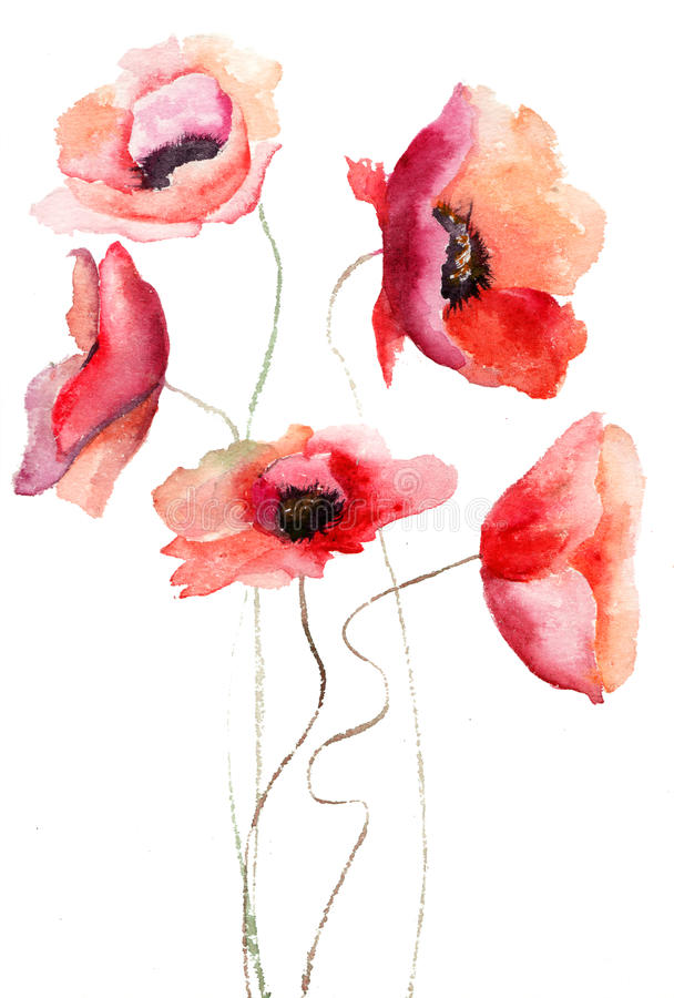 Download Beautiful Poppy flowers stock illustration. Image of vintage - 27436778