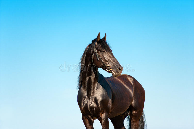 Beautiful portrait of a black horse on a background of sky stock photo