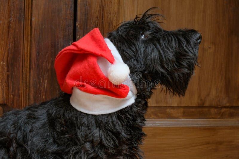Funny naughty dog in Santa hat stock photos