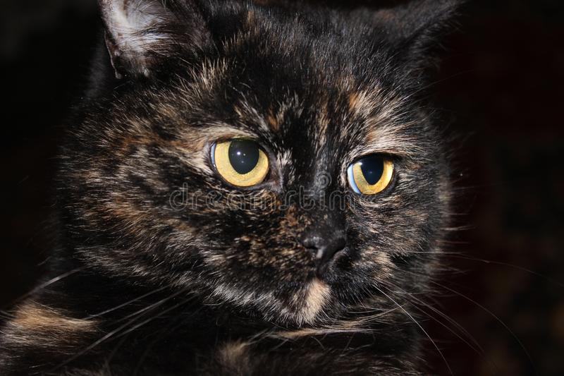 Beautiful portrait of a very beautiful cat stock photos