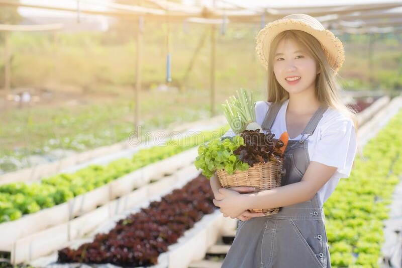 Beautiful portrait young asian woman smile harvest and picking up fresh organic vegetable garden in basket in the hydroponic farm royalty free stock images