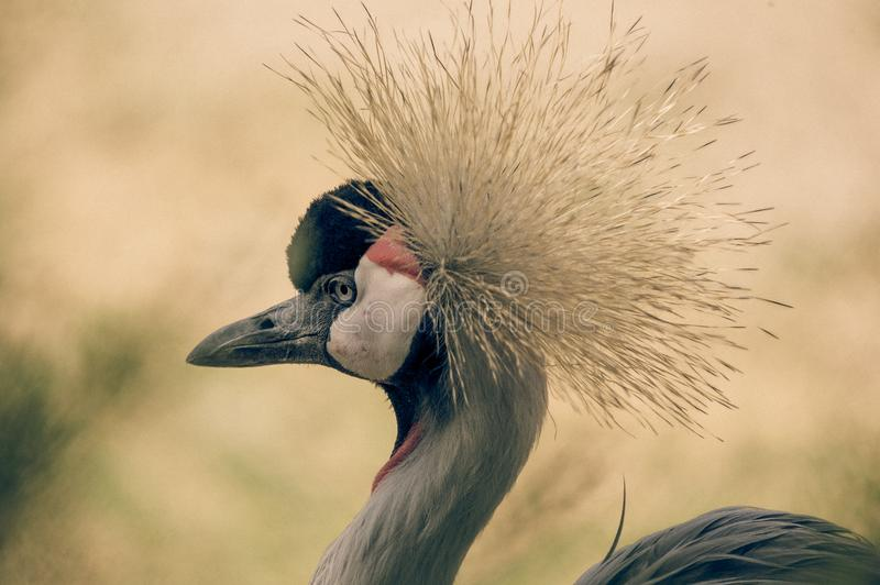 Crane bird alone profile in color at the zoo in summer royalty free stock photo