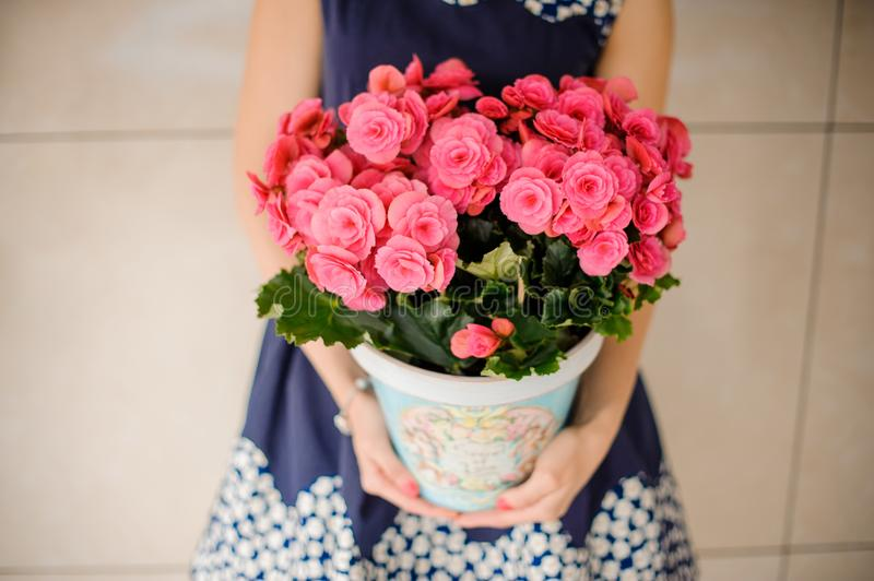 Beautiful pot of lovely bright pink flowers stock photos