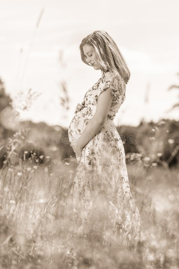 Beautiful pregnant woman in white summer dress in meadow full of yellow blooming flovers. Portrait of beautiful pregnant woman in white summer dress relaxing in royalty free stock images