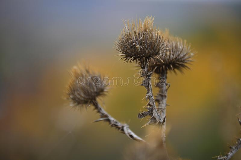 Beautiful prickly flower royalty free stock photo
