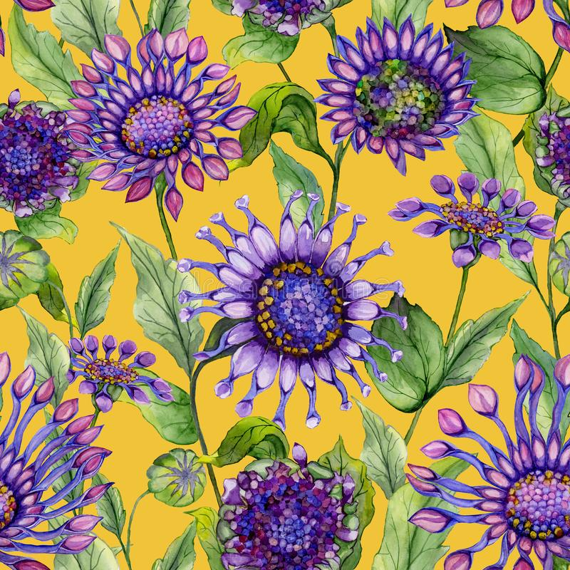 Beautiful purple African daisy flowers with green leaves on yellow background. Seamless bright floral pattern. Watercolor painting vector illustration