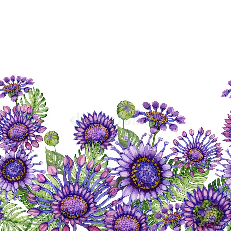 Beautiful purple African daizy flowers with exotic leaves on white background. Seamless floral pattern. Hand painted watecolor illustration. Fabric, wallpaper vector illustration