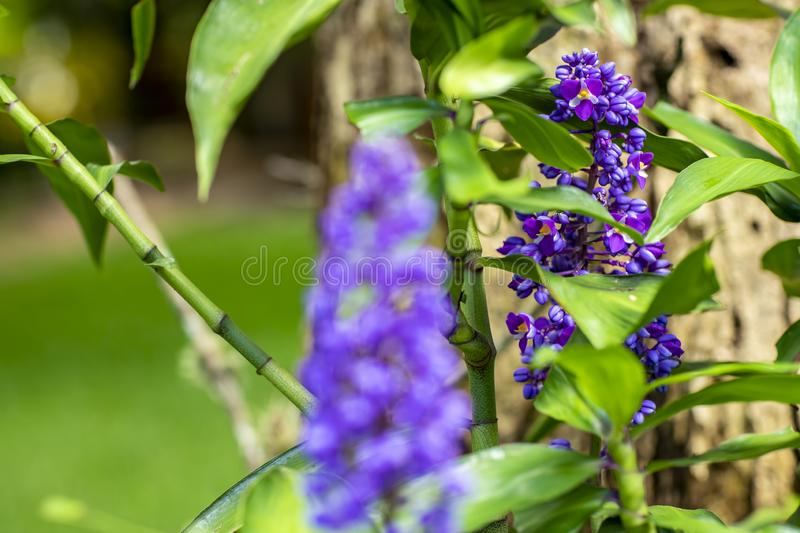 Beautiful purple flower and blurred nature background. stock photography