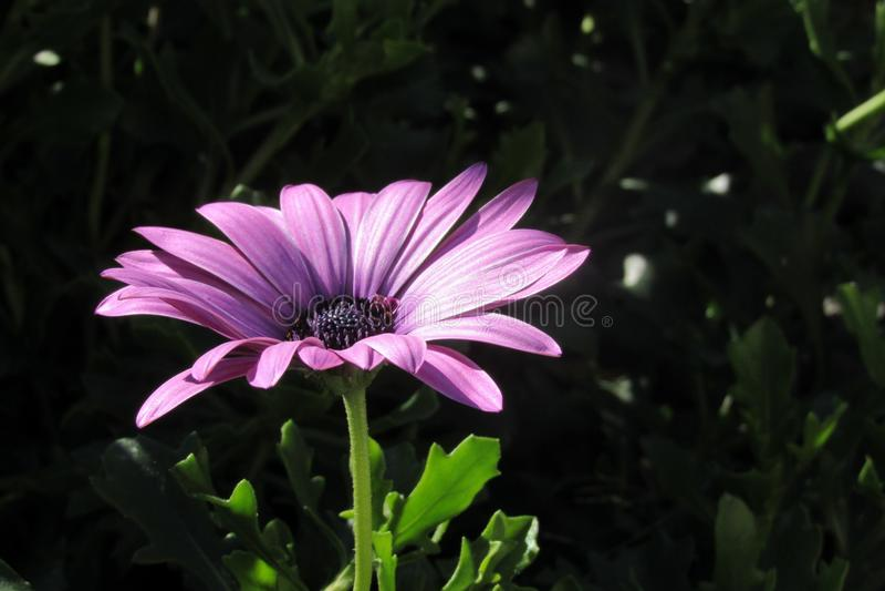 Beautiful purple flower stock photo