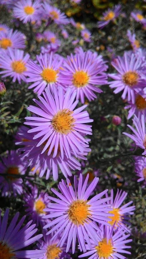 Beautiful purple flowers. stock photo