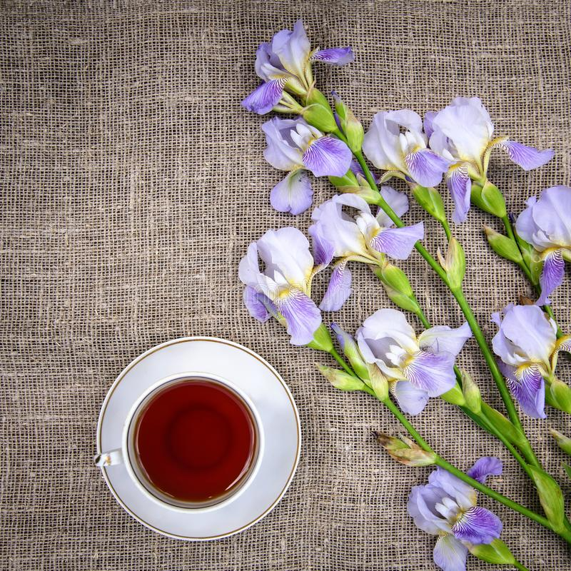 Beautiful purple flowers irises and a cup of tea on a canvas background. Beautiful purple flowers irises and a cup of tea on a gray canvas background, top view royalty free stock photos