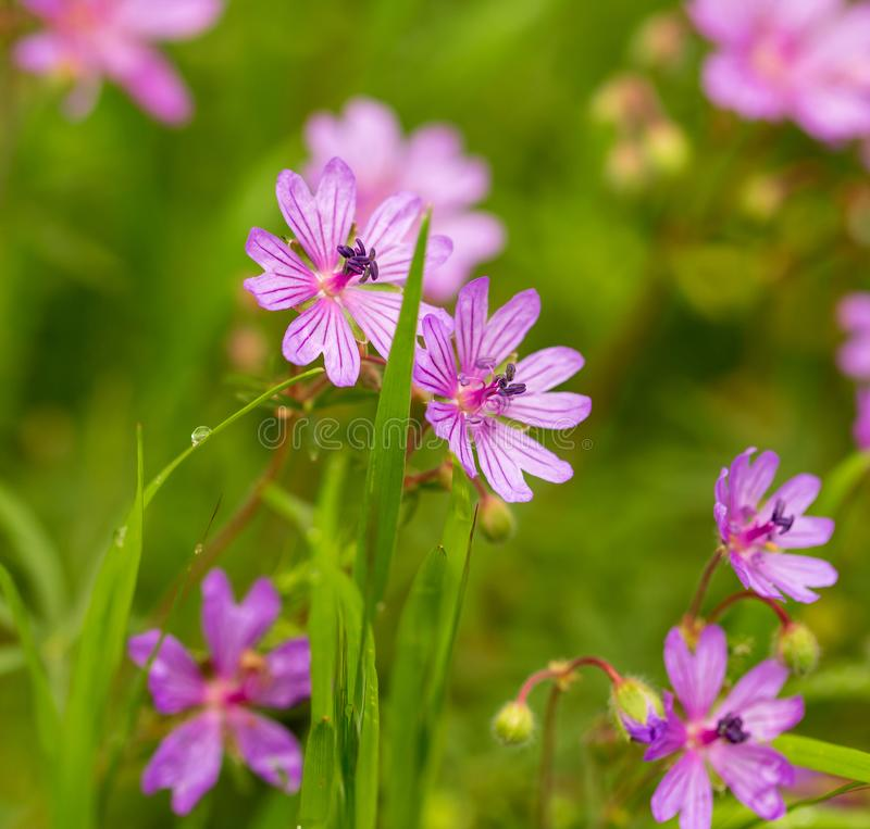 Beautiful purple flowers in nature stock photography