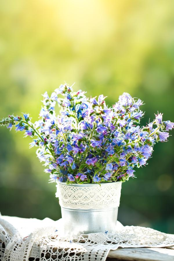 Beautiful purple flowers in a vase in a summer garden. Summer still life. stock image