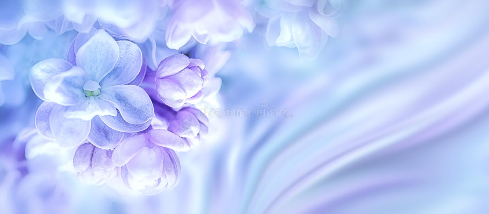 Beautiful purple lilac flowers blossom branch background. Greeting gift card template. Toned image. Nature abstract. Soft toned. C royalty free stock photos