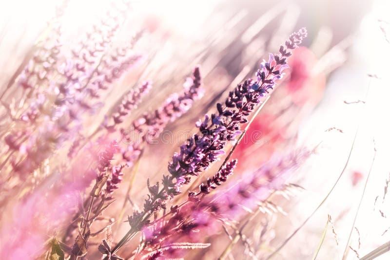 Beautiful purple meadow flowers stock photos