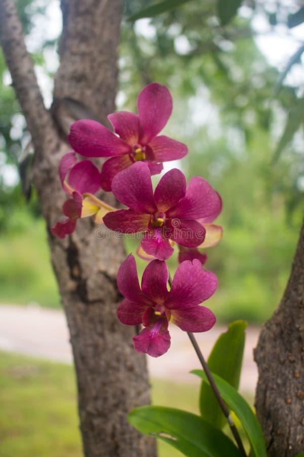 Beautiful purple orchid royalty free stock image