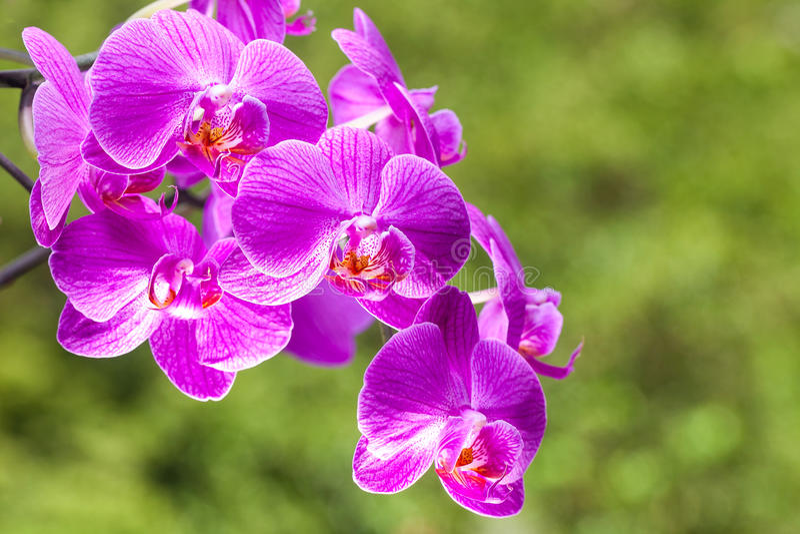 Beautiful purple orchid flower on the light green backround. Beautiful purple orchid flower on the light green floral backround stock photography