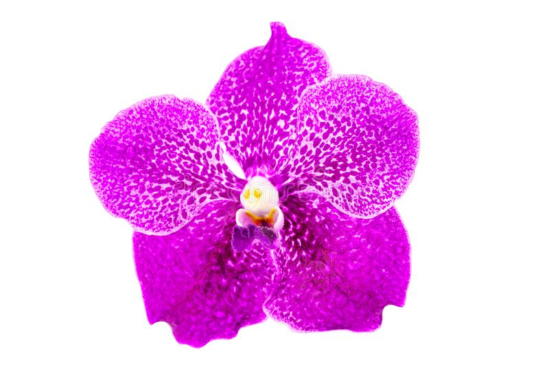 Beautiful Purple orchid flower with water drop isolated on white background with clipping path.  stock images