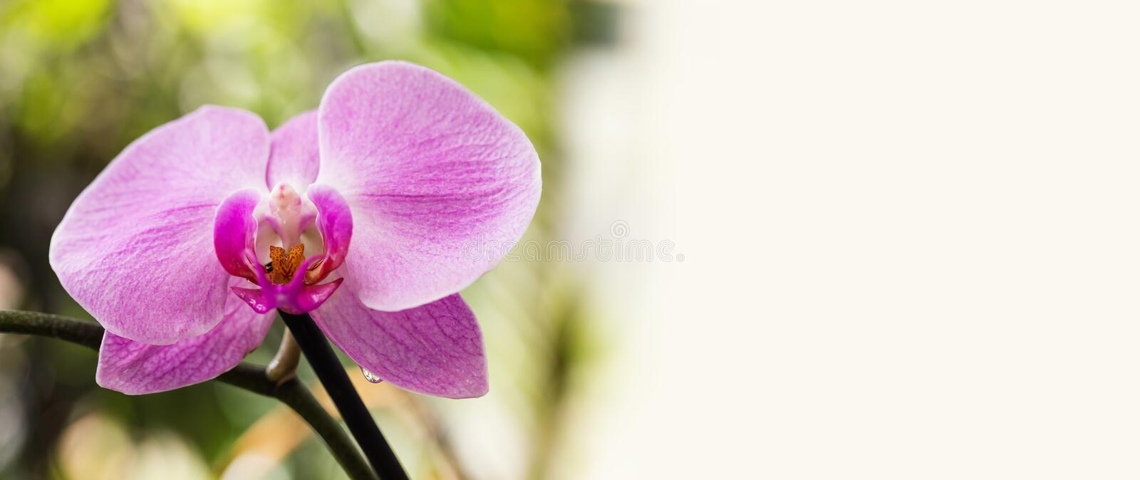 Beautiful purple Orchid flowers, macro view selective focus. Blooming orchids plant exotic nature landscape. Copy space stock photo