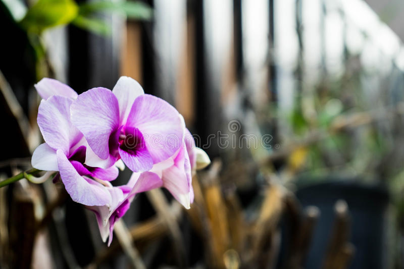 Beautiful purple orchid in the garden stock images