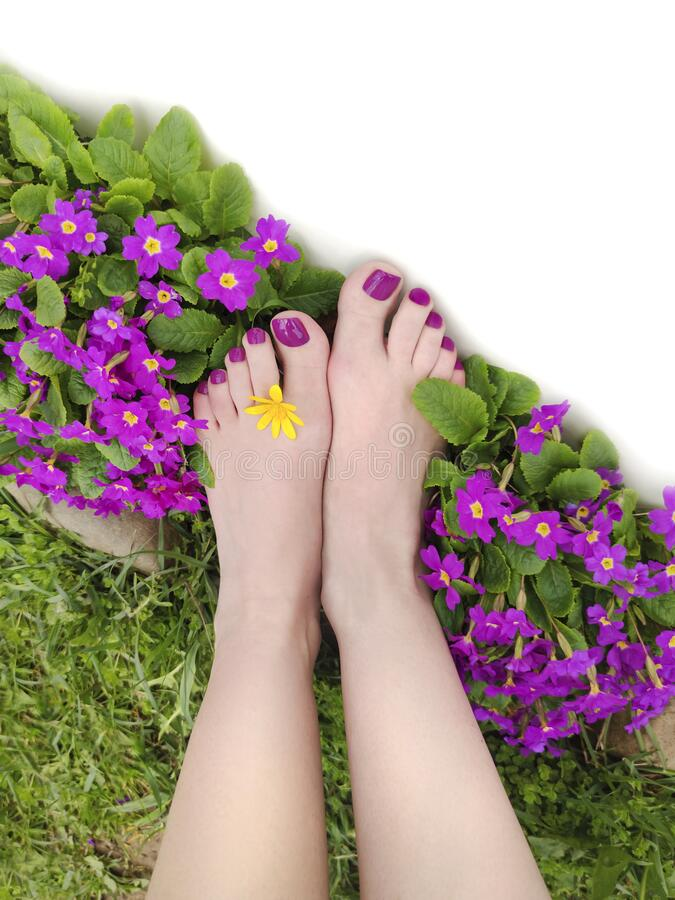 Beautiful purple pedicure on women`s feet with flowers stock photos