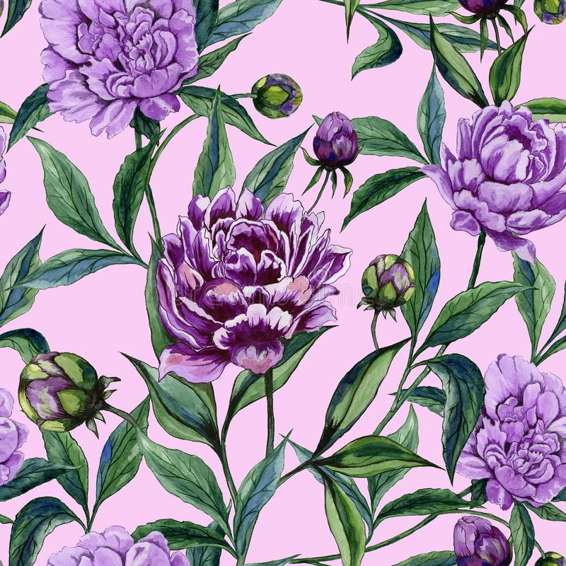Beautiful purple peony flowers with green leaves on pink background. Seamless floral pattern. Watercolor painting. Hand painted illustration. Can be used as a stock illustration