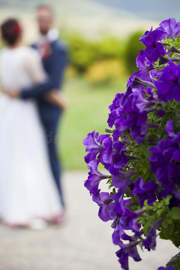 Wedding background. Beautiful purple petunia flowers, bride and groom dancing in the background on their wedding day stock photos