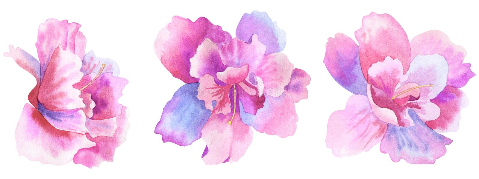 Beautiful purple pink flowers. Floral set. Hand drawn watercolor illustration. Isolated on white background stock illustration