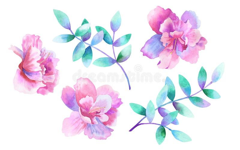 Beautiful purple pink flowers and green purple branches. Floral set. Elements for romantic design. Hand drawn watercolor royalty free illustration