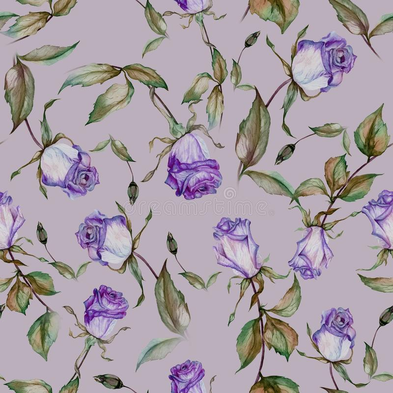 Beautiful purple roses on stems with green leaves on purple background. Seamless floral pattern. Watercolor painting. Hand drawn and painted illustration vector illustration