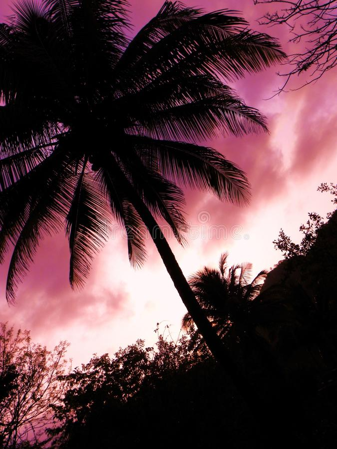 Sunset. A beautiful purple shaded sunset with coconut tree stock images