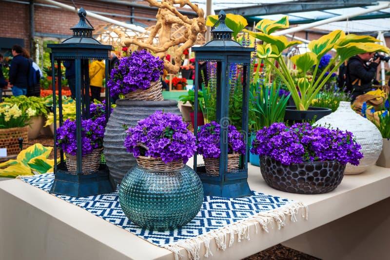 Beautiful purple spring flowers in the ornamental ceramic flowerpot royalty free stock image