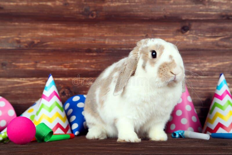 Beautiful rabbit with birthday caps stock photo