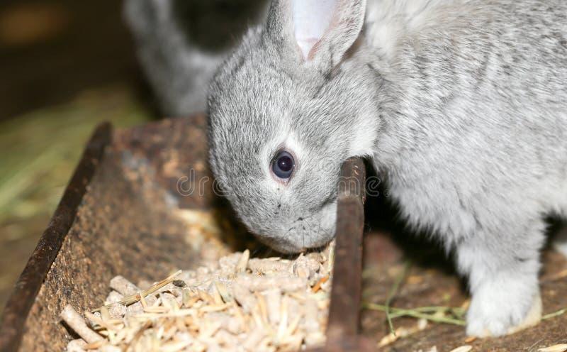 Beautiful rabbit on the farm royalty free stock image