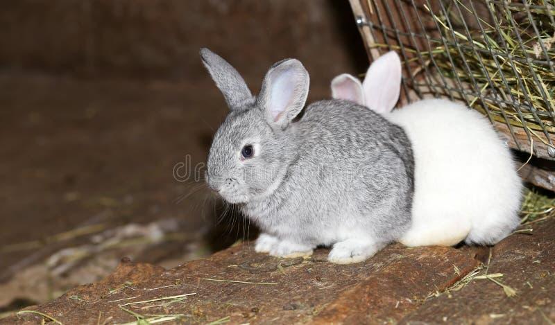 Beautiful rabbit on the farm stock image