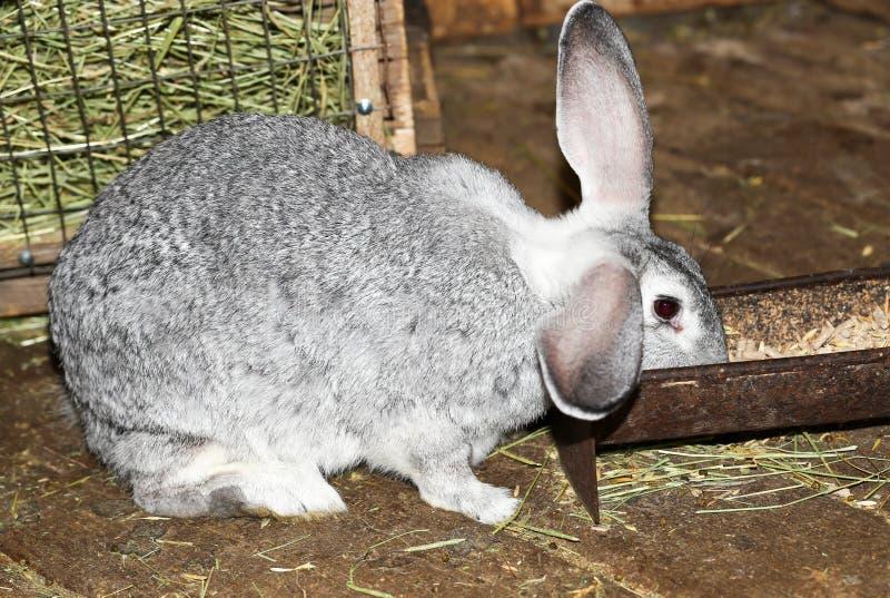 Beautiful rabbit on the farm stock photos