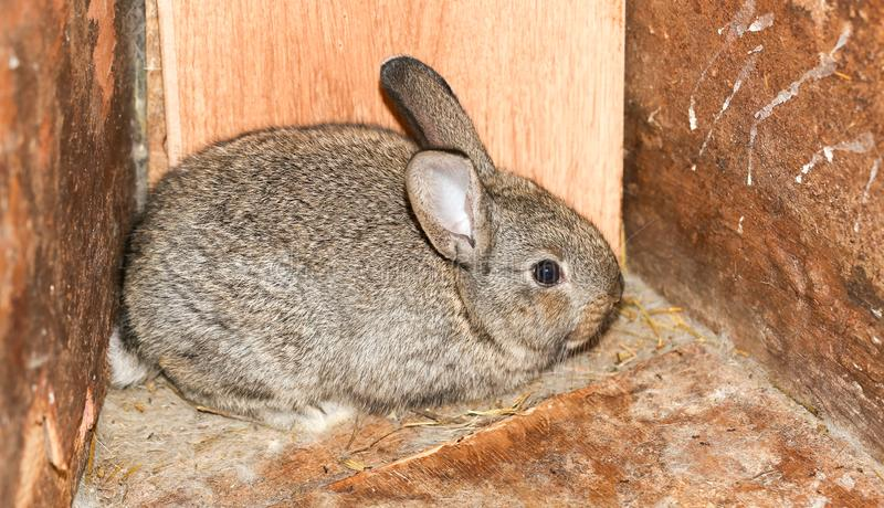 Beautiful rabbit on the farm royalty free stock images