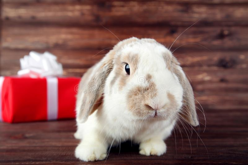 Rabbit with red gift box royalty free stock image
