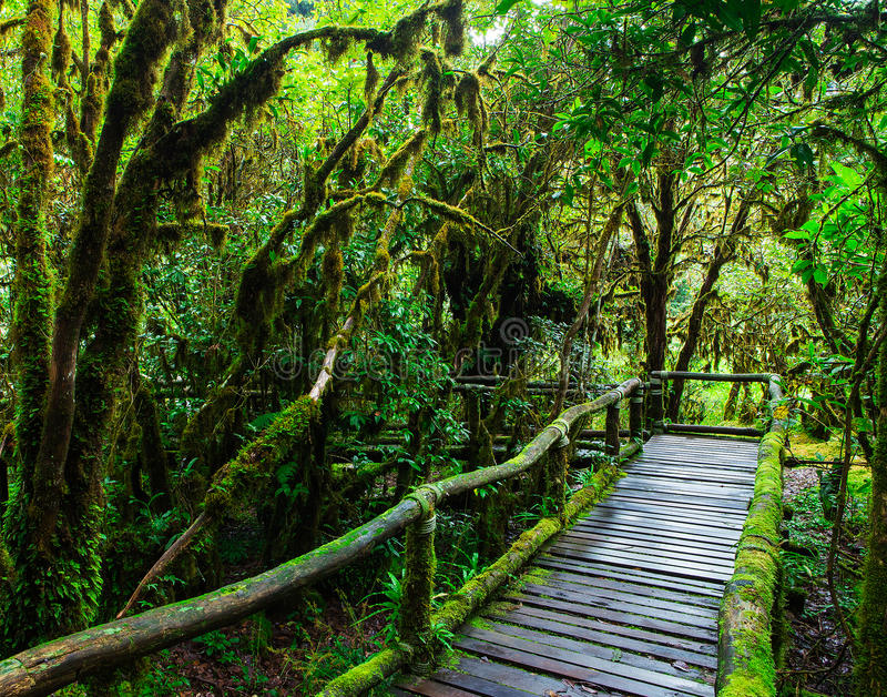Beautiful rain forest at ang ka nature trail stock photo
