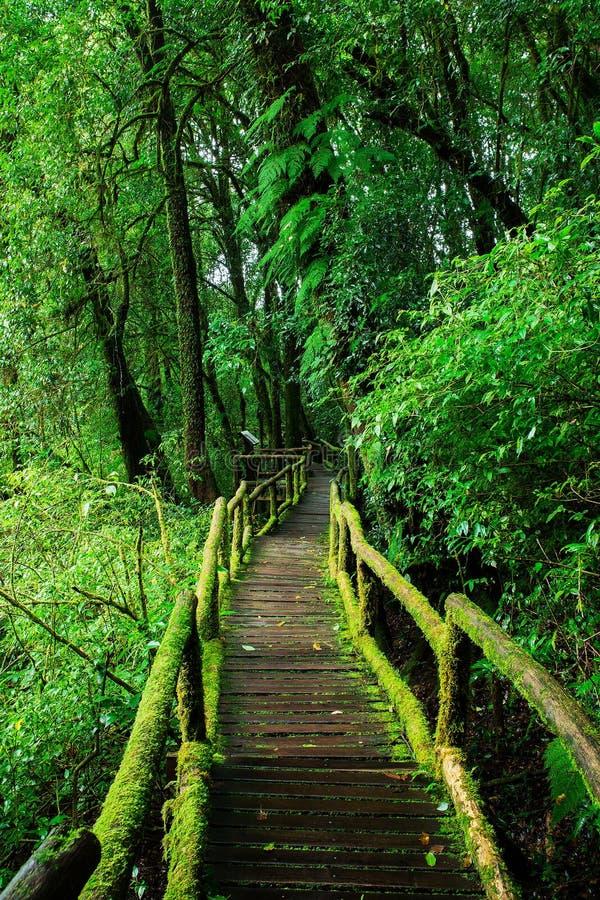 Beautiful rain forest at ang ka nature trail royalty free stock photos