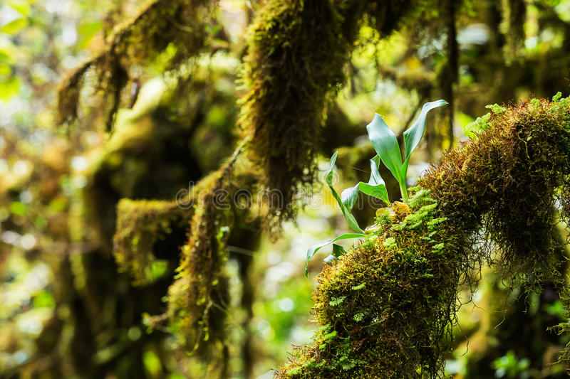 Beautiful Rain Forest stock images