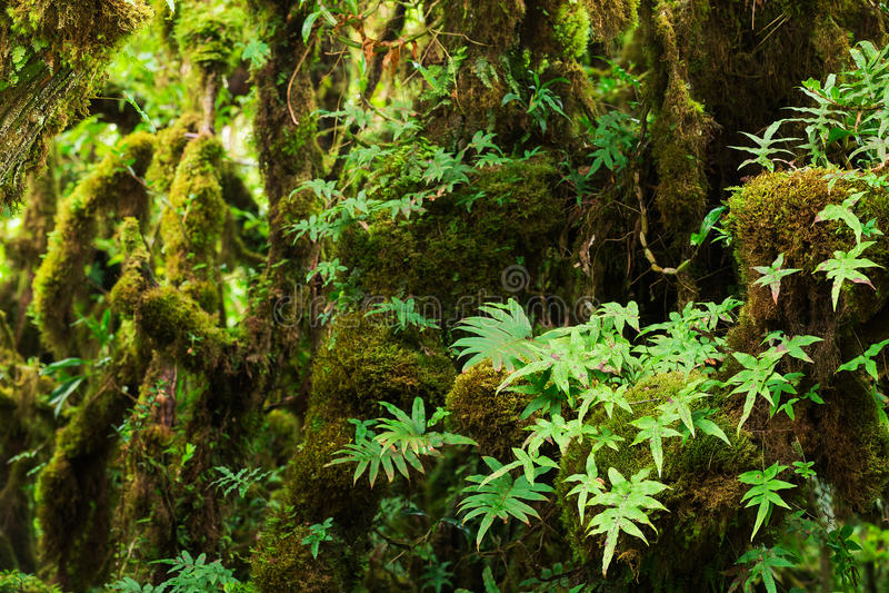 Beautiful Rain Forest stock image
