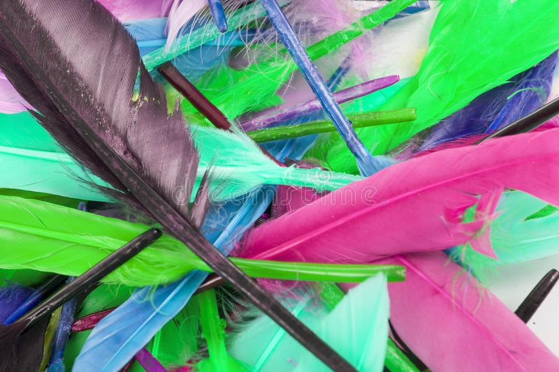 Beautiful rainbow color colored bird feathers. Parrot colors goose duck colorful painted feathers. Feather texture stock photography