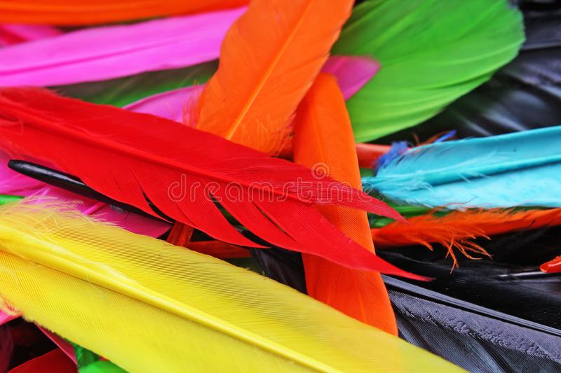 Beautiful rainbow color colored bird feathers. Parrot colors goose duck colorful painted feathers. Feather texture royalty free stock photos